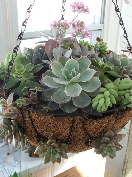 Hanging Basket of Succulents <3