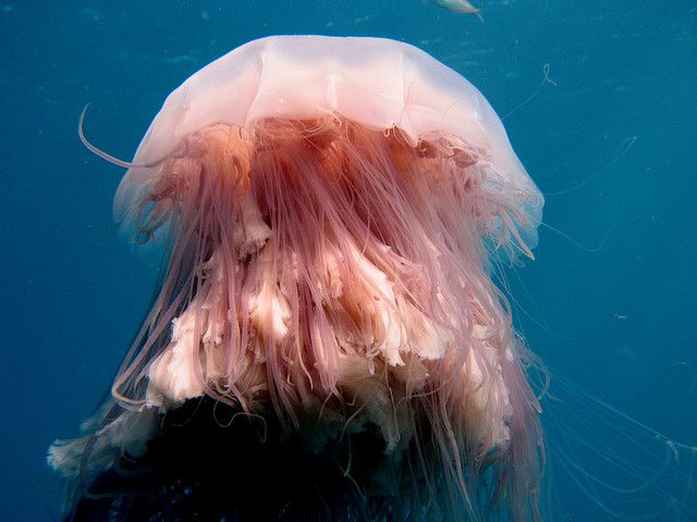 Information About Deep Sea
