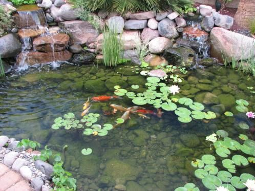 Water pond ideas koi pond will sustain water life with for Pond feature ideas