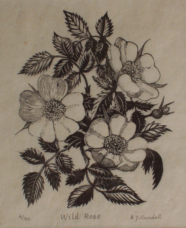 Original wood engraving by A J Cundall of 'wild rose' | Flickr - Photo Sharing!