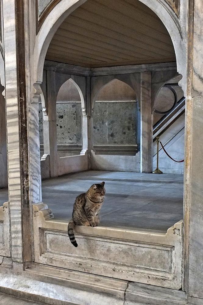 Hagia Sophia entrusted to Gli. 'HagiaSophiacat' . Gli's cat lives for many years in Hagia Sophia. Gli welcomes thousands of tourists who visit the Hagia Sophia in Istanbul/TURKEY. Attracting the attention of tourists and celebrities. -- Ayasofya ona emanet. 'HagiaSophiacat' Ayasofya'yı ziyaret eden binlerce turisti, yıllardır Gli adlı aynı kedi karşılıyor. Turistlerin ve ünlülerin de ilgisini çekiyor.