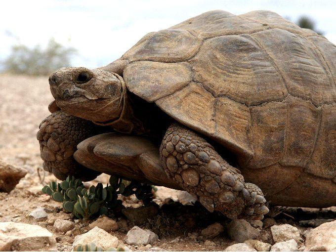 Las Islas Galápagos albergaban una especie maravillosa y a veces indiferente ante nuestros ojos. Las tortugas gigantes de aquella región han desaparecido. Murió la última que marca el fin de su especie y de un símbolo de lucha por la conservación animal tras décadas de esfuerzos científicos para lograr su reproducción.