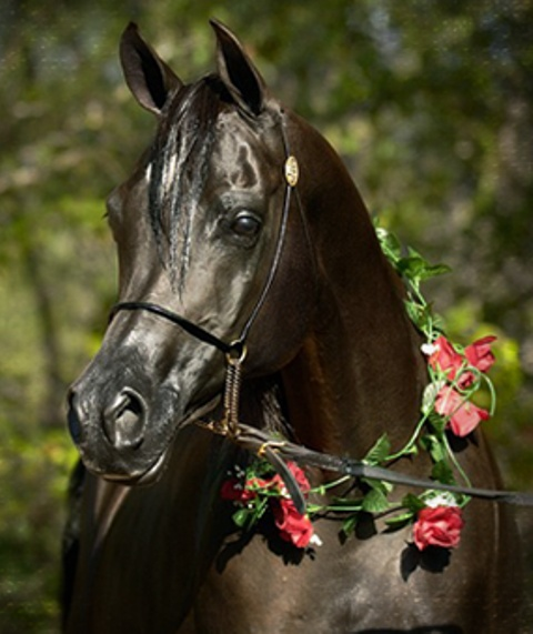 Wedding horse flower wreath ❀Flowers in their coats❀ Toni Kami