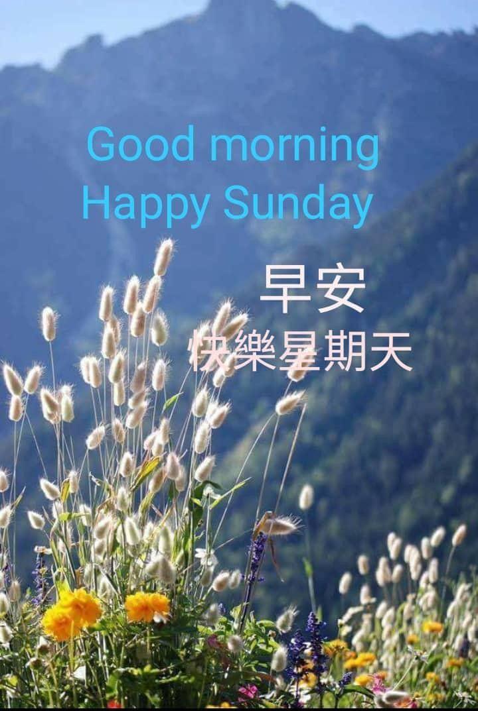 Happy Sunday Good Morning Happy Sunday Sunday Greetings Good Morning Inspiration