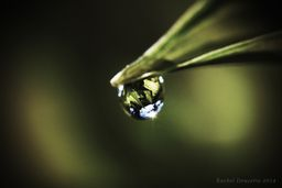 One Dew Drop at sunset