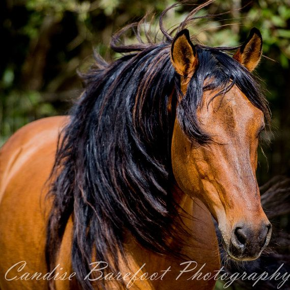 Levende kunst wilde paarden paard fotografie Paardensport