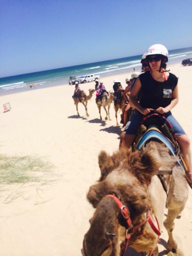 Camel riding, Port Stephen, Sydney, NSW AUSTRALIA