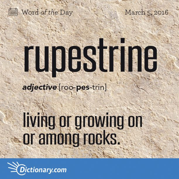 Dictionary.com's Word of the Day - rupestrine - Biology. living or growing on or among rocks. Also, rupicolous.