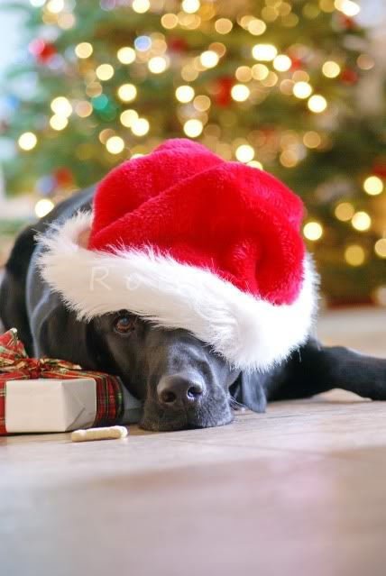 Isn't this a sweet picture or what? #Christmas Black Labrador Retriever Merry Christmas Card Puppy Holiday Dogs Santa Claus Dog Puppies Xmas Labs