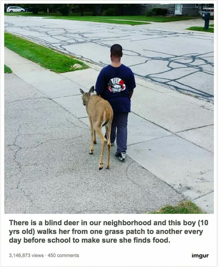 10 year-old helps a blind deer