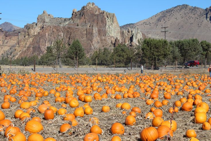 This pumpkin patch is located in Terrebonne, just 30 minutes from Bend with beautiful Smith Rock as the backdrop.  Family fun including a themed corn maize, petting zoo, pumpkin cannon & more!