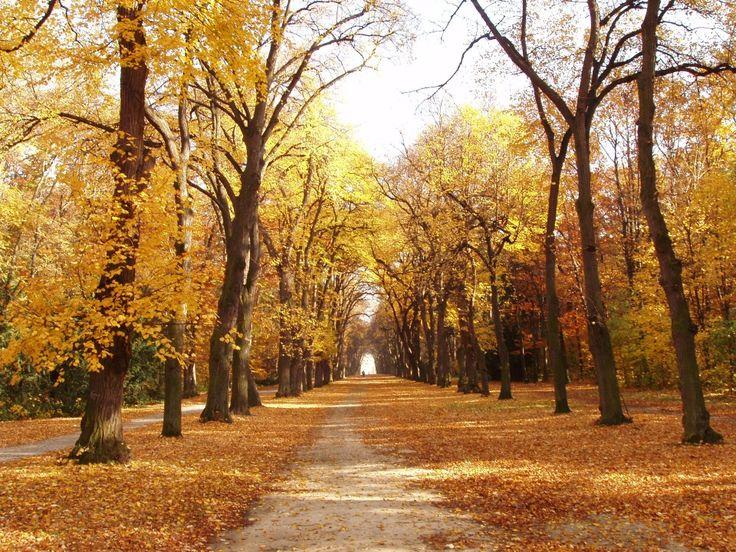 Podzim, obora Hvězda