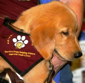 D4D - Dogs4Diabetics trains service dogs to smell the subtle change in low blood sugar & to alert their owners to check their blood sugar! amazing!