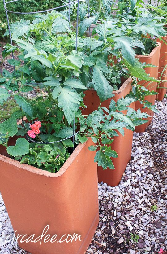 terracotta chimney flue liners as raised garden containers