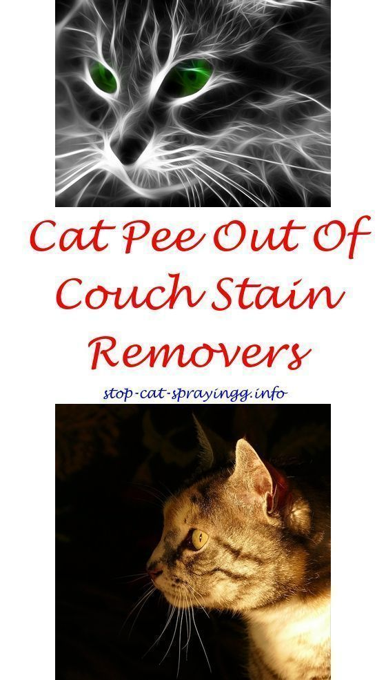 Charmant Female Cat Marking Cat Urine Out Of Couch Dogs   Cat Urine Remover Tile.keep