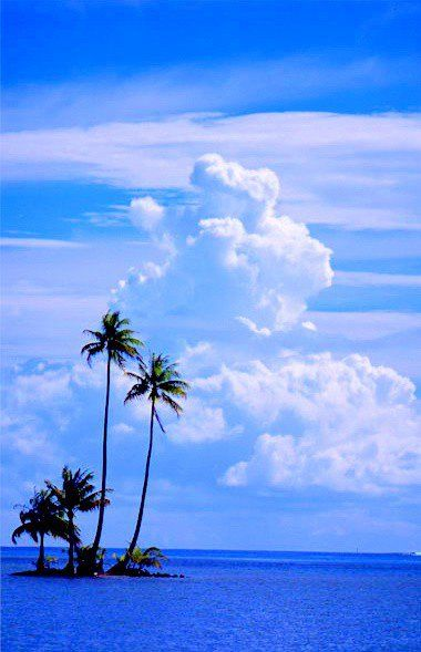 ❖ Palm trees on the ocean