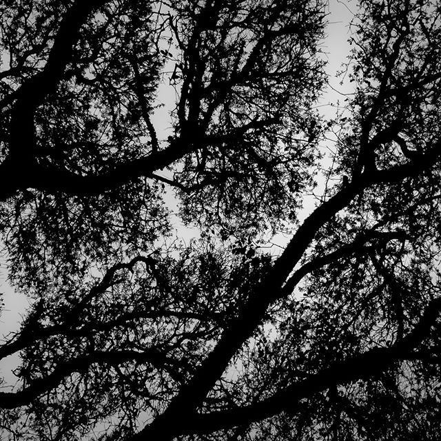 The Oak Tree A Mighty Wind Blew Night And Day It Stole The Oak