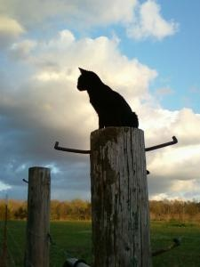 kitty on a fence post
