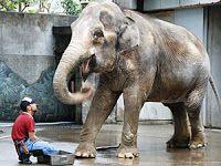 慰安婦問題について、いろんな報道: 象の「はな子」はホントに不幸なのか。飼育の日 なぜ…引きこもるゾウのはな子。狭い檻で飼育する動物園は...