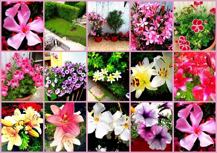 flowercollection  :) collage montage