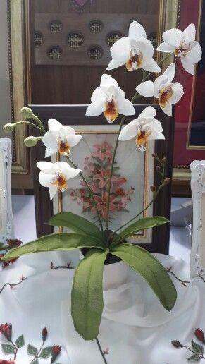 İğneoyası orkide  Turkish needle lace orchid