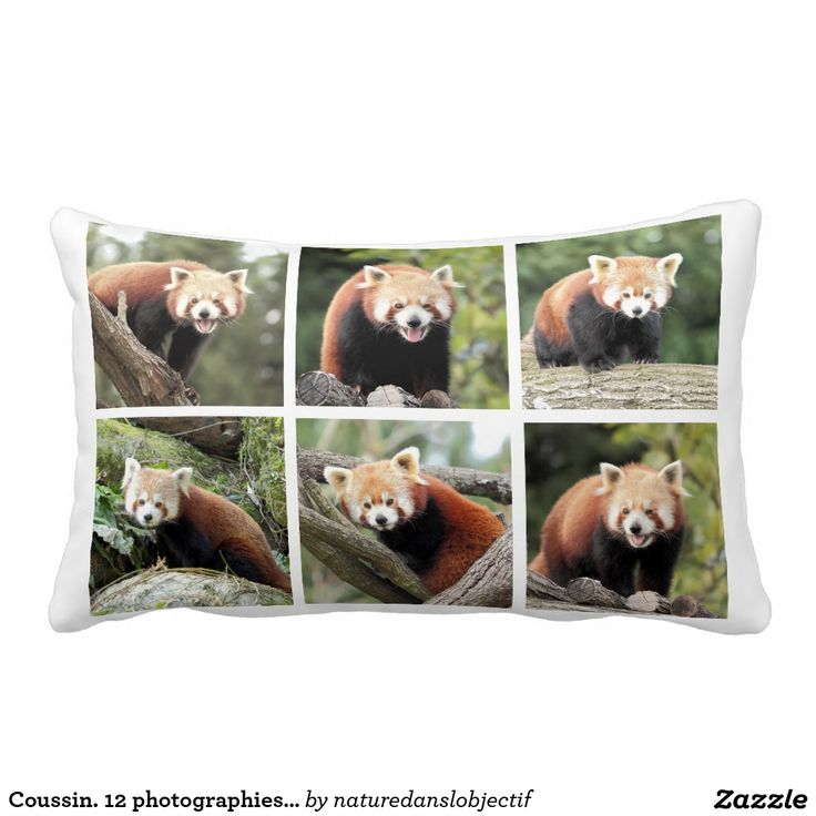 Extrêmement 174 best Red Panda | Panda roux images on Pinterest | Red pandas  UL54