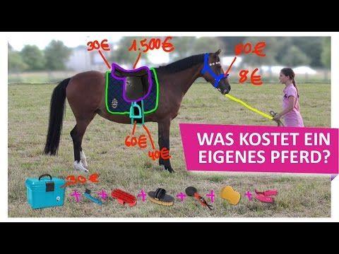 Was kostet ein eigenes Pferd? Teil 3: Zubehör und Sattel - YouTube