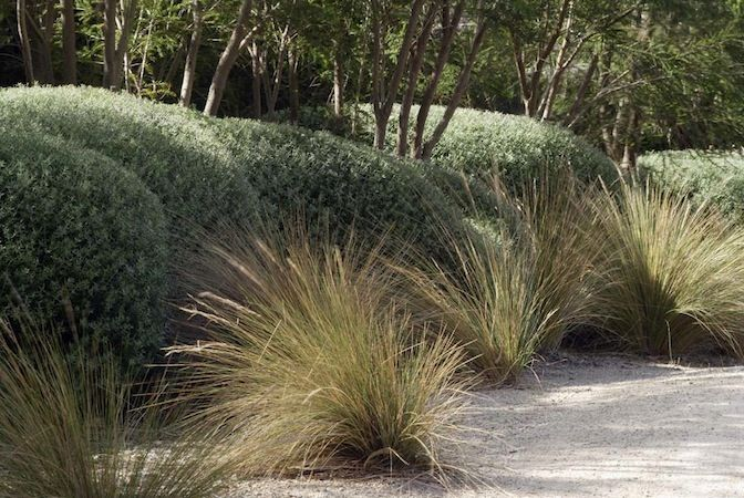Austrostipa stipoides to gravel garden beds to northern and western entry