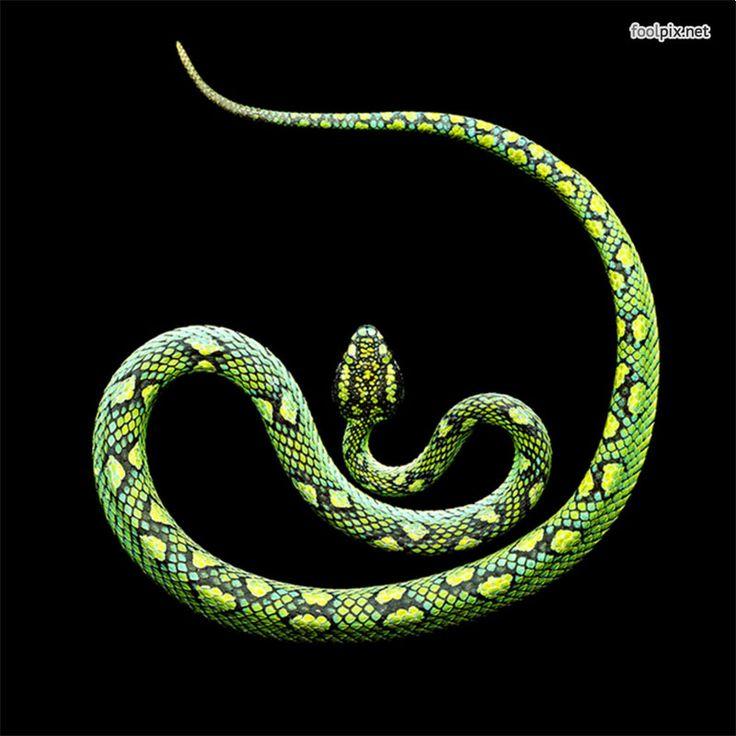 призыватель змея