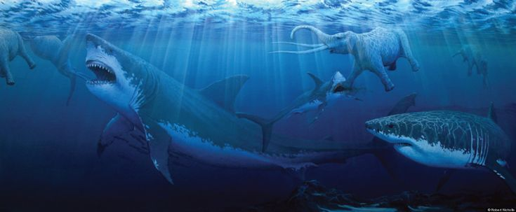 megalodon shark, extinct