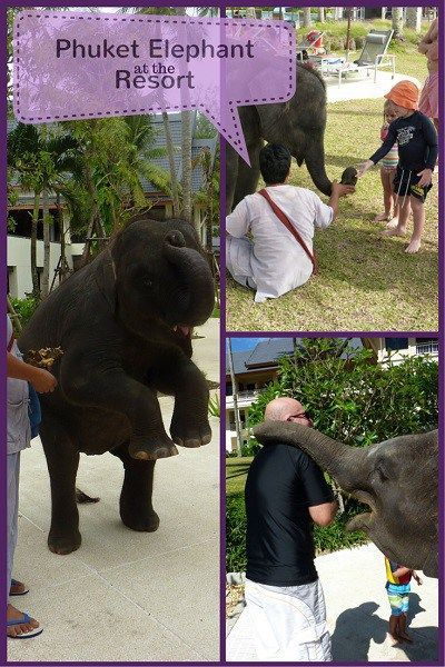 Travel with kids to Phuket and enjoy the elephant at the Outrigger Laguna beach Resort