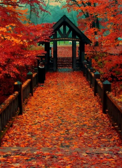 Autumn at the Bridge ~ Seven Bridges, Grant Park, South Milwaukee, Wisconsin by Indy Kethdy