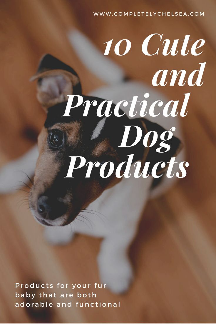Blog Post from Completely Chelsea lifestyle blog! 10 adorable and products that are practical too! Spoil your fur baby! www.completelychelsea.com #dogproducts #cutedogproducts #practicaldogproducts #treatjar #dogcollar #dogleash #dogcoat #dogcarrier #dogdish #dogbed