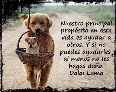 #propósito #frases #valores