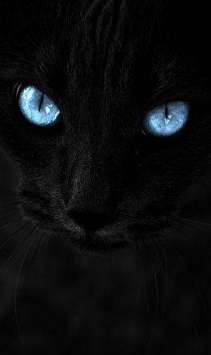 青い瞳の黒い猫のiPhone壁紙 | 壁紙キングダム スマホ版