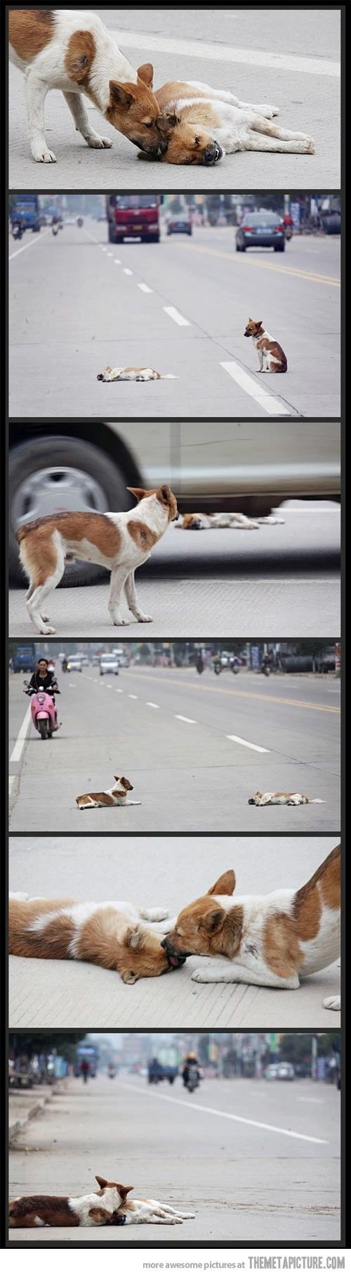 Dogs are amazing… this is sad. and why the hell was the person just taking pictures?