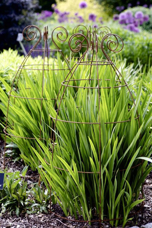Sidney Belle-offers support for larger established planting, shrub Roses and the tallest of perennials. Made of elegant solid steel wire with rusted finish.