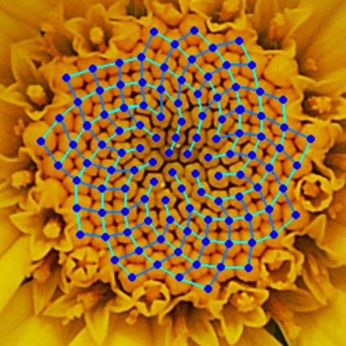 The Fibonacci Sequence in Flowers