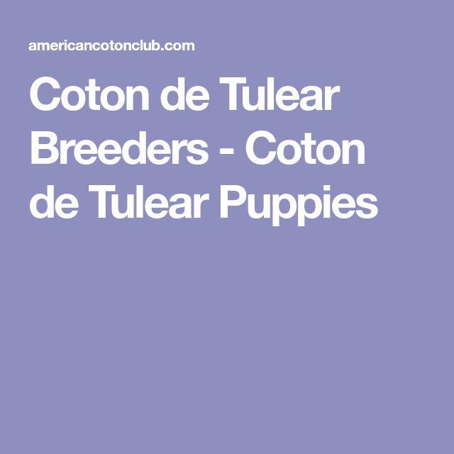 Best 25 Coton De Tulear Ideas On Pinterest Coton De