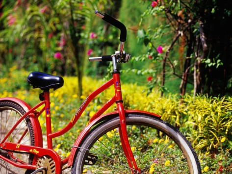 Red Bicycle, Half Moon Resort Photographic Print