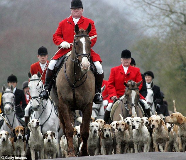 should fox hunting be banned essay Hunting needs to be banned  yes all hunting should be banned  for  example, deer populations need to be restricted by the available food limits of   god's gift to the earth, we're no more above or below the fox i see roaming the  fields.