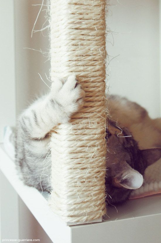 Wrap thin rope around the legs of end tables to create scratching posts. | 27 Brilliant Hacks Every Cat Owner Needs To Know