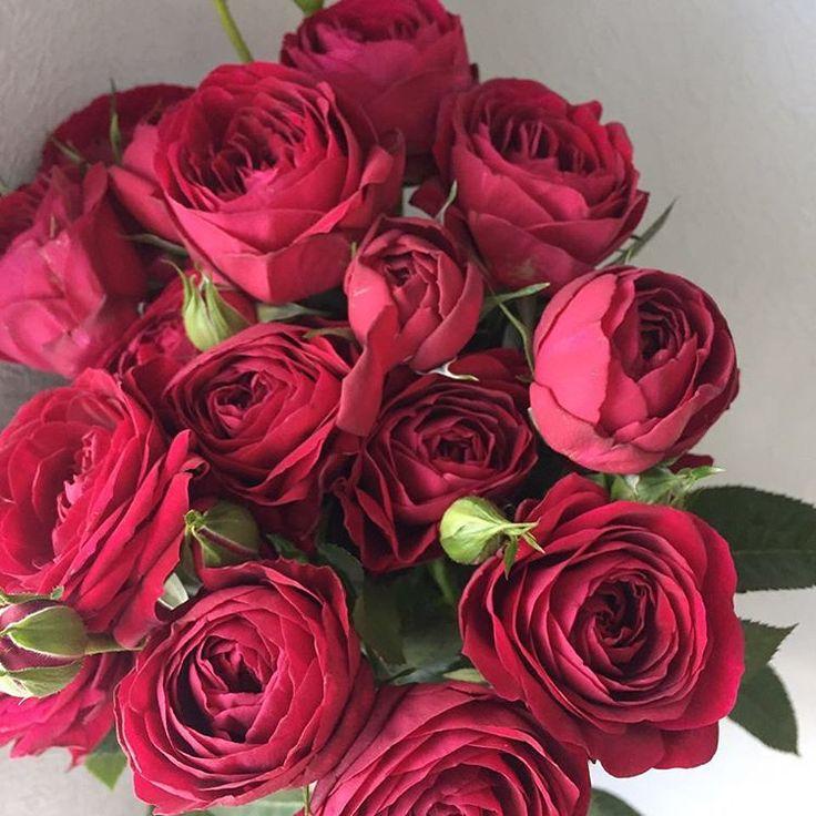 рубиновые любимцы и красавцы❣  9 шт 3400 11 шт 4100 15 шт 5400  для заказа: WHATs App и по телефону +7 (985) 911-57-49 ❣ #mono_flowerslovers