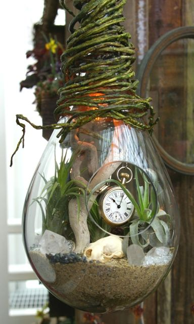 Very cool hanging terrarium