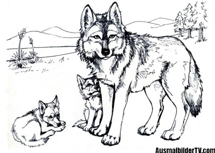 Wolf Ausmalbild Puppy Coloring Pages Wolf Colors Horse Coloring Pages