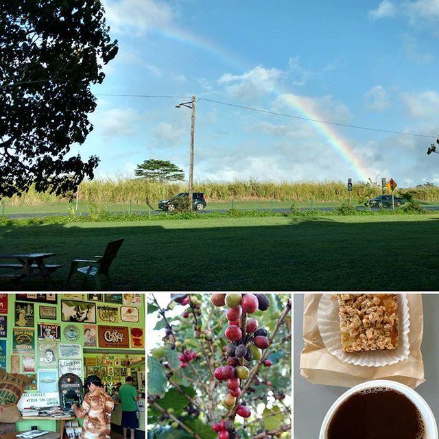 【wildlifehawaii】さんのInstagramをピンしています。 《おはようございます🌄ノースショア向かっています🚐途中畑の中のコーヒー屋さんので一休み☕大きな虹🌈晴れそう🌞いい波来てるかな🌊  オアフ島ノースショアにワイアルア地区ではコーヒーが生産されています🌳新鮮でオーガニックなコーヒーが手に入るのでうれしいですね🐝ちなみにハワイのコーヒーはとくとくな濃いスタバのコーヒーと比べて薄めでさっぱりしていて飲み易い👌😉おいしいよ✌  #ハワイ #ノースショア #ノースショアサーフィンレッスン #ハレイワ #サーフィン #かわいい #コーヒー #旅行 #オーガニック #無添加 #朝ごはん #波 #海 #空 #ナチュラル #シンプル #ヨガ #ヘルシー #自然 #癒やし #旅 #カフェ #スイーツ #キャンプ #アウトドア #ハイキング #サステナブル》