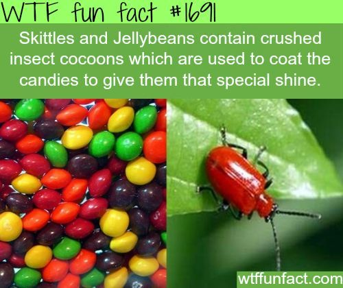 insects fun facts | Skittles contain crushed insect cocoons - WTF fun facts | quotes