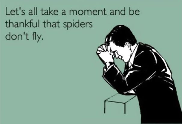 Lol so true! Be thankful that spiders don't fly. Or snakes too!