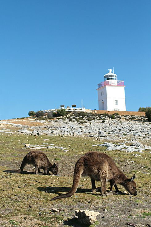 Oh, also the kangaroos of Kangaroo Island | 34 Reasons Australia Is The Most Beautiful Place On Earth