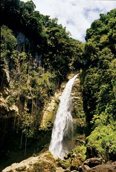 Dominica - pretty waterfall, good hiking, reasonably priced honeymoon wedding Repinned by Moments Photography www.MomentPho.com